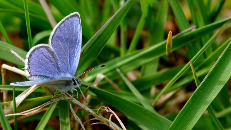 Fonds d'écran Animaux Insectes - Papillons PAPILLON NATURE