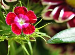 Fonds d'écran Nature petite fleur...