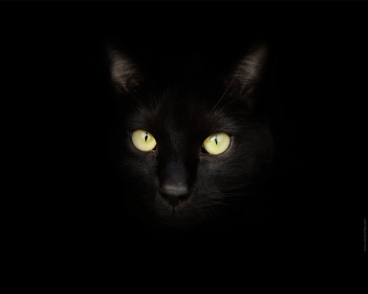 Wallpapers Animals Cats - Kittens Sirius Black le Chat Noir