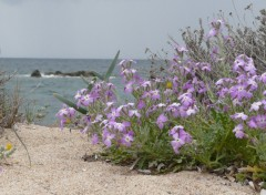 Wallpapers Nature Fleur sur la plage