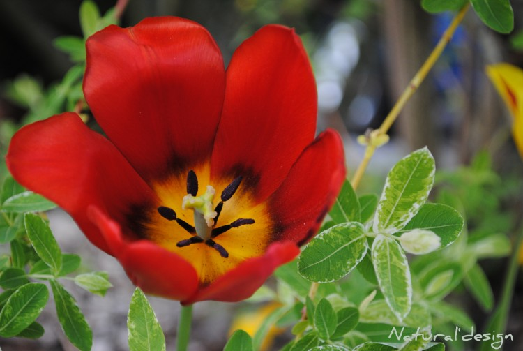 Fonds d'écran Nature Fleurs Wallpaper N°260924