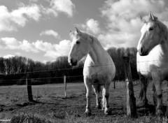 Fonds d'écran Animaux 1 cheval, des chevaux ... ^^