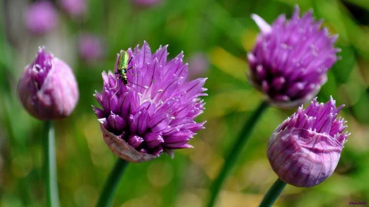 Fonds D Ecran Nature Fonds D Ecran Fleurs Nature Fleur Insecte Par
