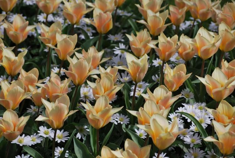 Fonds d'écran Nature Fleurs Wallpaper N°261629