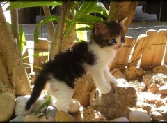 Wallpapers Animals chaton