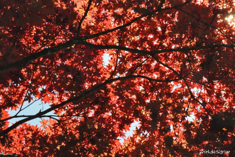 Wallpapers Nature Trees - Forests Feuille rouge