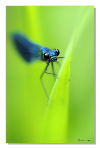 Wallpapers Animals Insects - Dragonflies Dragonfly