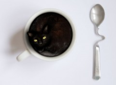 Wallpapers Animals Le Pti Noir - Chat noir dans une tasse à café