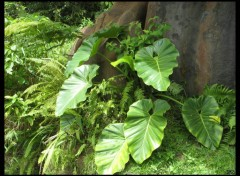 Wallpapers Nature Grandes feuilles