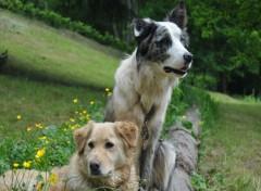 Fonds d'écran Animaux chiens qui posent