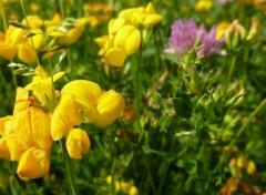 Fonds d'écran Nature fleurjaunemacro