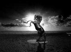 Fonds d'écran Art - Numérique Fascination