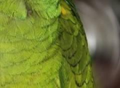 Wallpapers Animals Kiwi