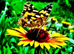 Wallpapers Animals Butterfly