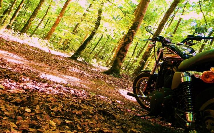 Fonds d'écran Motos Harley Davidson harley davidson sporstert  883R