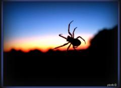 Wallpapers Animals araignée