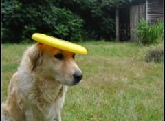 Wallpapers Animals chien qui joue au frizbee