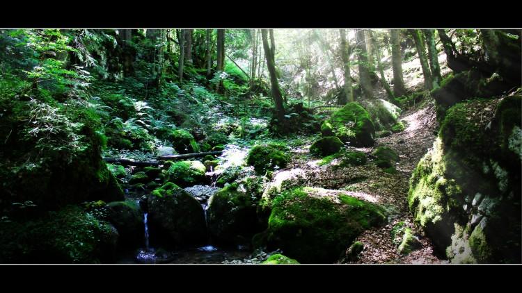 Fonds d'écran Nature Arbres - Forêts enchantement