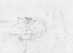 Wallpapers Art - Pencil Mietze