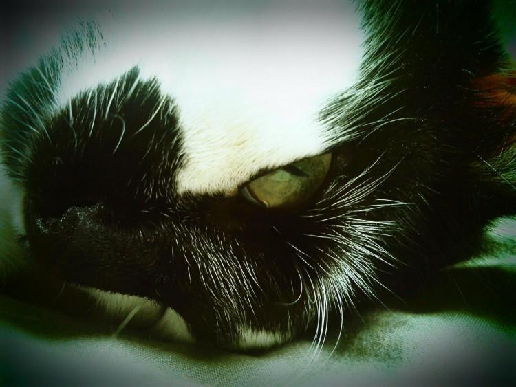 Wallpapers Animals Cats - Kittens Neko