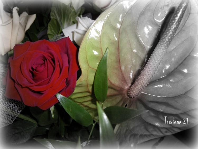 Fonds D Ecran Nature Fonds D Ecran Fleurs Rose Rouge Par