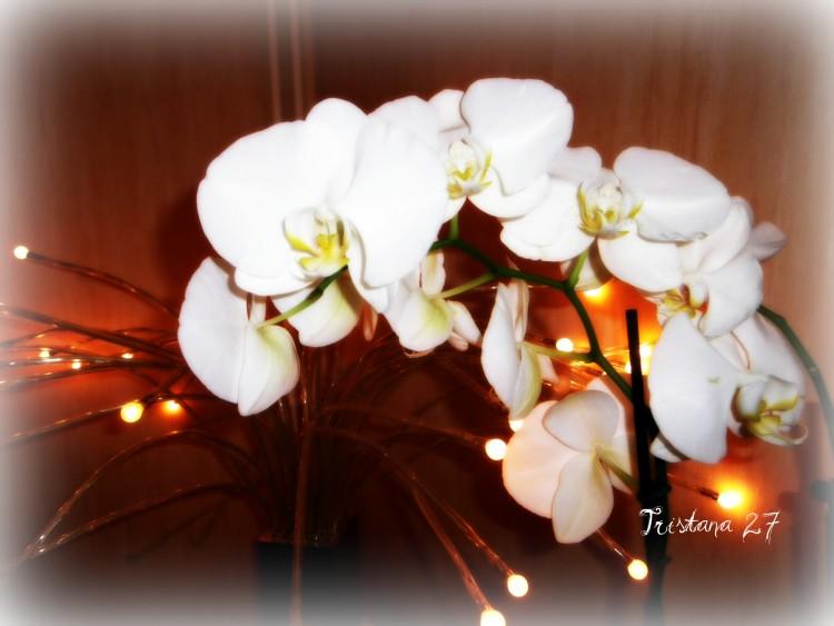 Wallpapers Nature Flowers Orchidées...