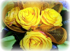 Wallpapers Nature Roses jaunes...