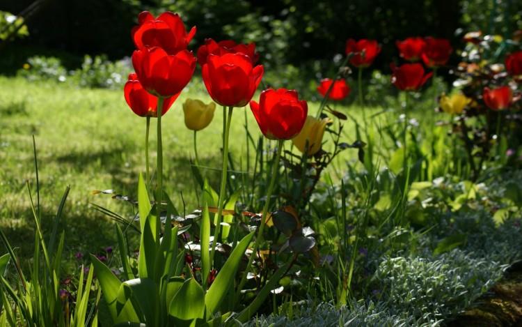 Fonds d'écran Nature Fleurs Wallpaper N°268537