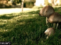 Wallpapers Nature champignons