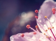 Wallpapers Nature Fleur de printemps