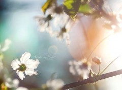 Wallpapers Nature A contre jour