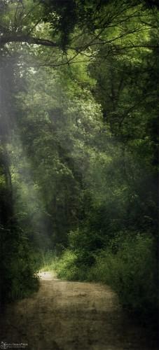 Fonds d'écran Nature Arbres - Forêts Promenade