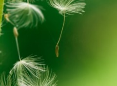 Wallpapers Nature Fragile