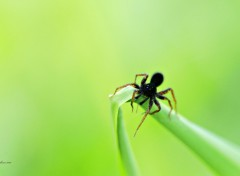 Wallpapers Animals The Spider is Quiet