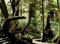 Fonds d'écran Nature Rain Forest