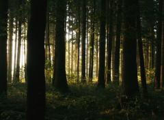 Fonds d'écran Nature Ambiance 3