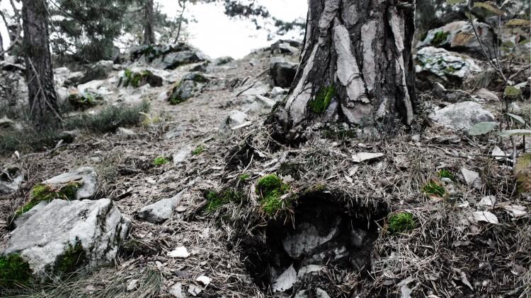 Fonds d'écran Nature Arbres - Forêts Foret
