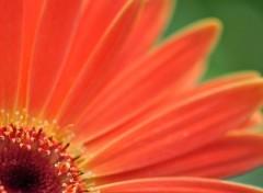 Fonds d'écran Nature Image sans titre N°270539