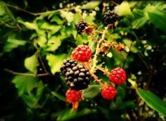 Fonds d'écran Nature Fruits Sauvages