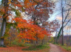 Wallpapers Nature Sentier d'automne - 1