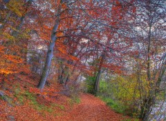 Wallpapers Nature Sentier d'automne - 2
