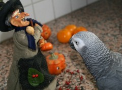 Fonds d'écran Animaux Halloween