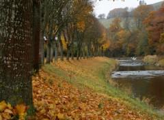 Wallpapers Nature Aux feuilles de l'eau
