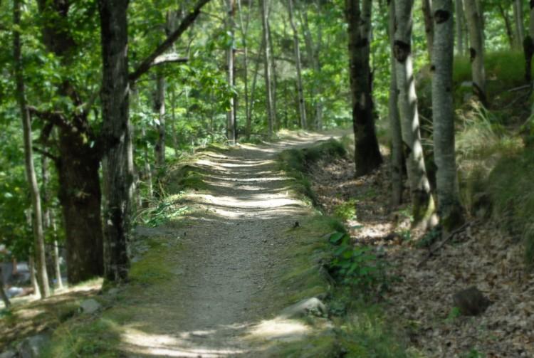 Fonds d'écran Nature Arbres - Forêts Wallpaper N°272082
