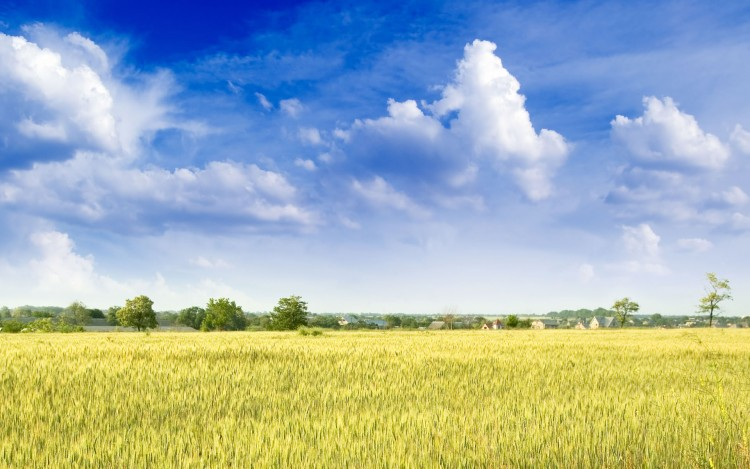 Wallpapers Nature Wallpapers Fields Entre Ciel Et Terre By
