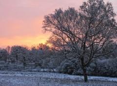 Fonds d'écran Nature L'hiver arrive !
