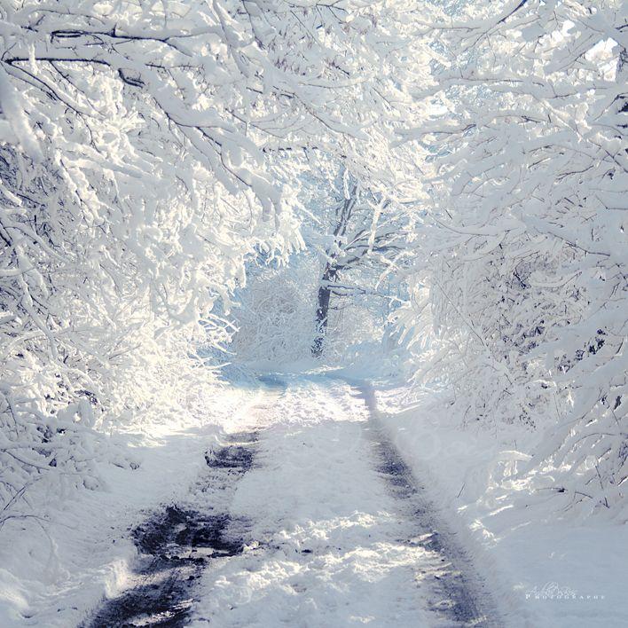Fonds d'écran Nature Saisons - Hiver Chemin de neige.