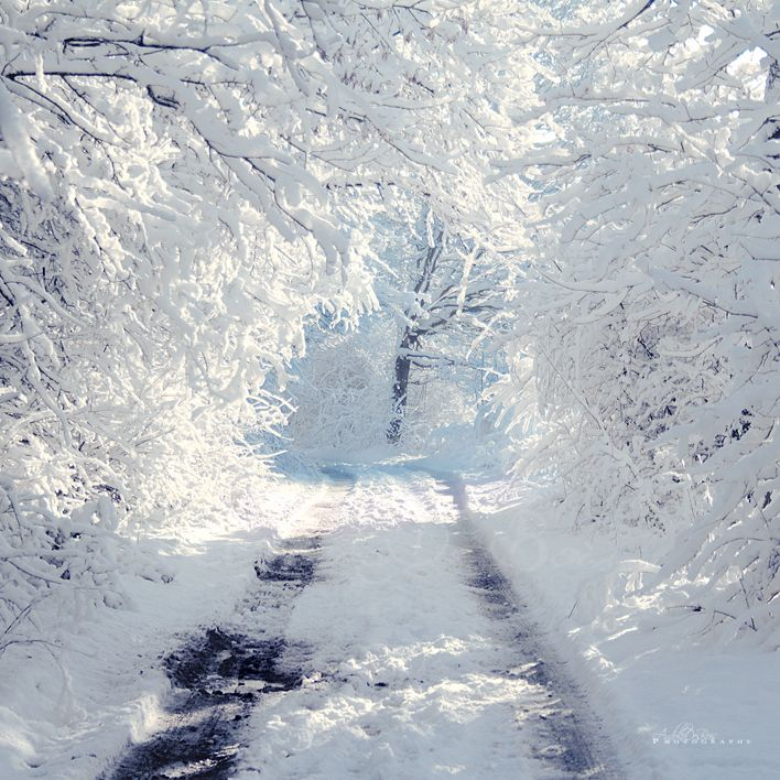 Wallpapers Nature Saisons - Winter Chemin de neige.