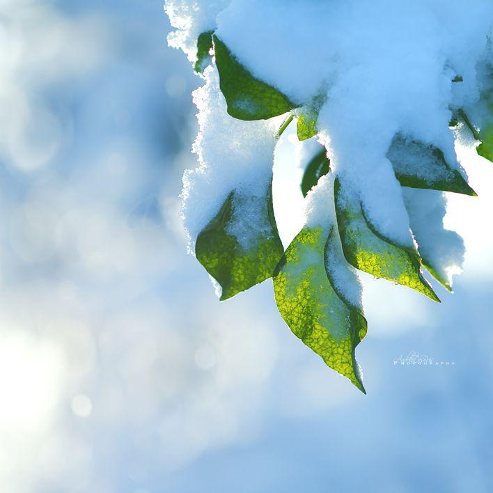 Fonds d'écran Nature Feuilles - Feuillages Vert Et Blanc.