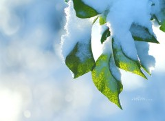 Wallpapers Nature Vert Et Blanc.